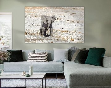 Baby olifant in Namibië