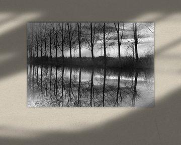 Bomenrij van RM Photographics