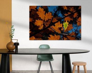Autumn leaves van Ger Mestrum