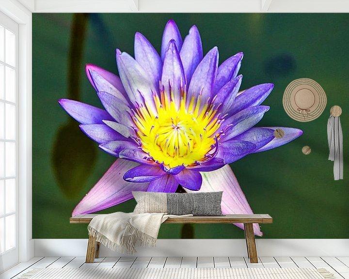 Beispiel fototapete: Heiliger Lotus von Eduard Lamping