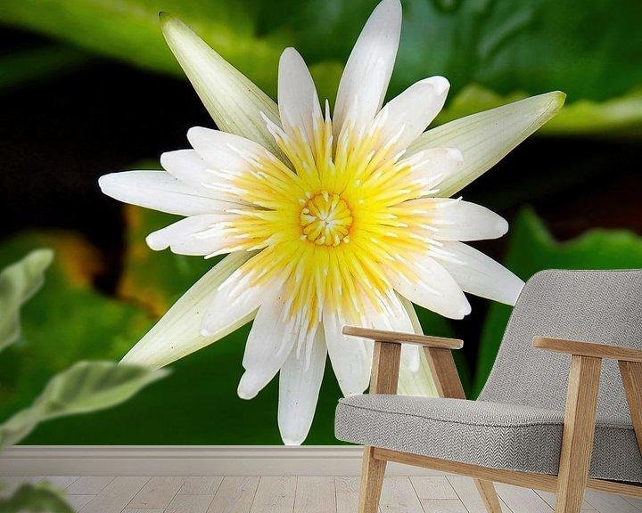 Sfeerimpressie behang: Heilige Lotus van Eduard Lamping