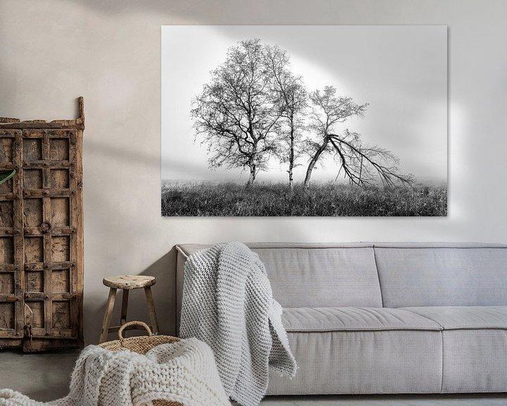 Beispiel: Birken im Nebel von Peter Bolman