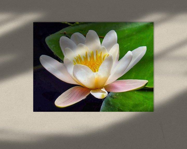 Sfeerimpressie: Waterlelie/Heilige Lotus van Eduard Lamping