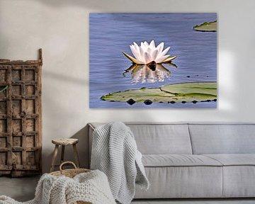 Waterlelie/Heilige Lotus van Eduard Lamping