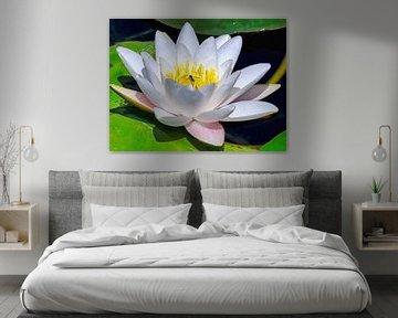 Waterlelie/ Indische Lotus van Eduard Lamping