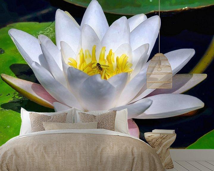 Beispiel fototapete: Seerose/ Indischer Lotus von Eduard Lamping