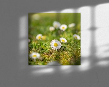 Bloemen Lente van Mariusz Jandy