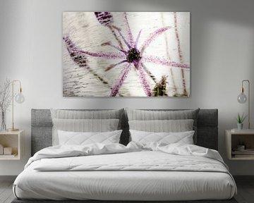 Blüte vom Allium in Eis