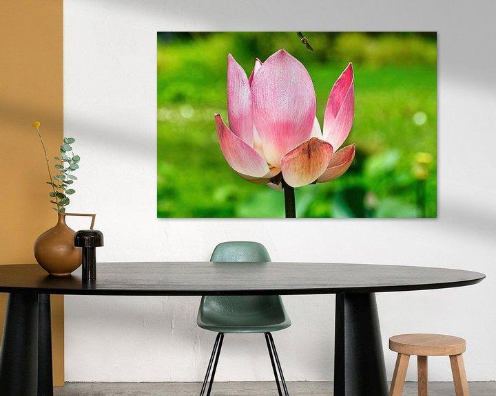 Sfeerimpressie: Heilige Lotus/Indische Lotus van Eduard Lamping