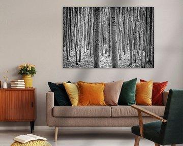Birken in Schwarz und Weiß von Pierre Verhoeven