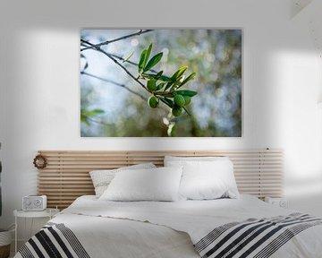 Groene olijven van Bianca ter Riet