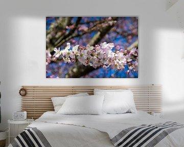 Rosa Blüte und blauer Himmel von Ingrid de Vos - Boom