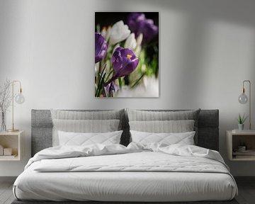 Lila Krokus in einem Blumenfeld I von Mister Moret Photography