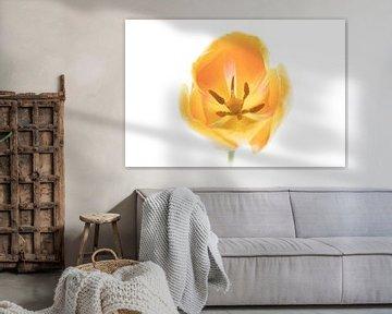 Tulpe Gelb von Tulip Series Suur von Marja Suur