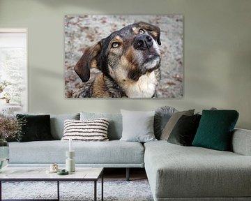 Portret van een hond