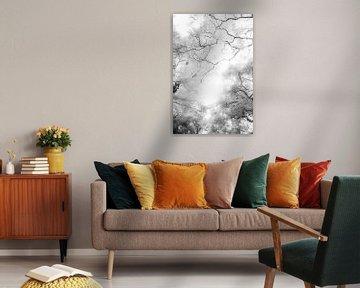 Äste gegen den Himmel | Schwarz-Weiß-Druck von Bäumen | Abstrakt von Wendy Boon