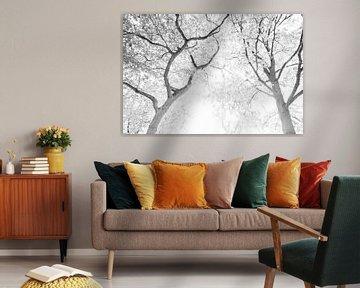 Sonnenlicht durch Baumkronen | Schwarz-Weiß-Druck | Im Wald von Wendy Boon