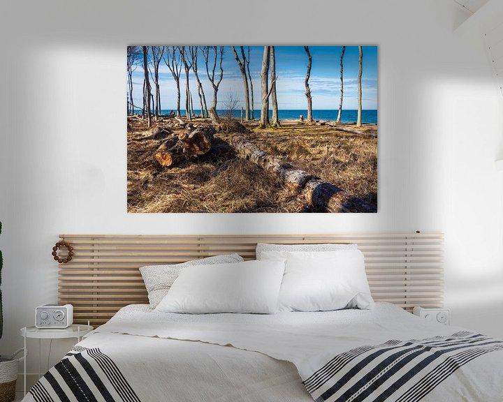 Beispiel: Gespensterwald an der Ostseeküste bei Nienhagen von Rico Ködder