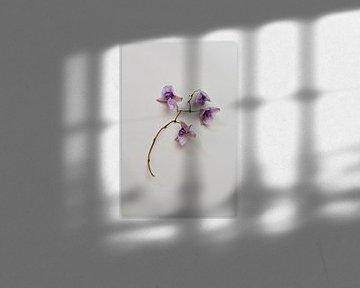 Botanisches Stillleben, getrocknete Orchidee von Joske Kempink