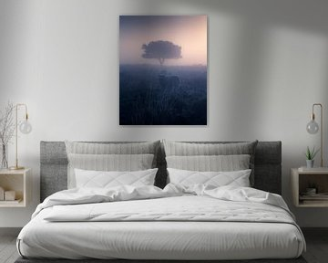 Ein Schaf im Nebel von Niels Tichelaar