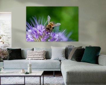 Biene bei der Arbeit in lila Blume von Qeimoy