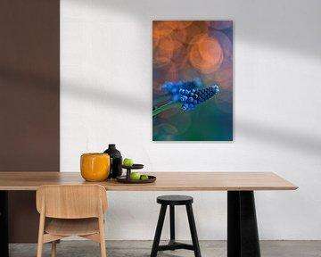 Blaue Traubenmuscari von Lindy Schenk-Smit