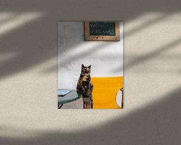 Katze in den Straßen von Chora auf der Insel Amorgos, Griechenland von Teun Janssen