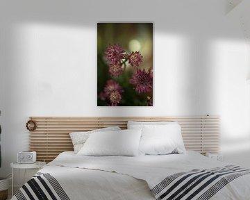 Blume #9 von tim eshuis