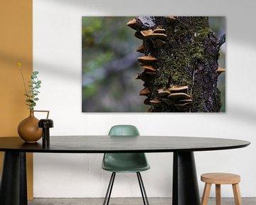 Champignons bruns sur un tronc de bouleau sur whmpictures .com