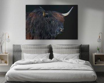 schwarze Hochlandrind-Kuh von Joachim G. Pinkawa