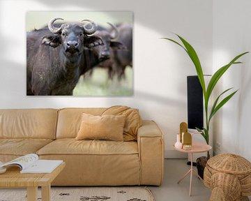 Büffel auf den Ebenen der Masai Mara, Kenia von Louis en Astrid Drent Fotografie