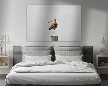 Ein echter holländischer Vogel, die Uferschnepfe in ihrer charakteristischen Art auf einem Bein steh von Louis en Astrid Drent Fotografie