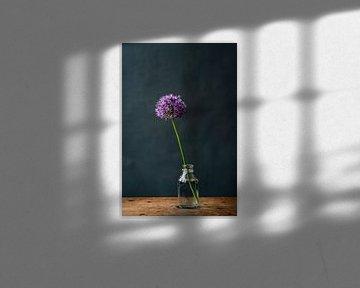 Foto | Allium | Zierzwiebel | lila Blume in Vase | botanisch | Stillleben von Jenneke Boeijink