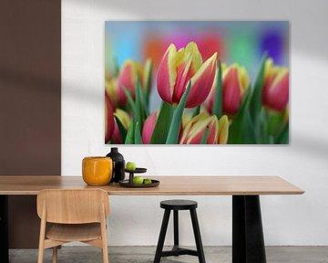 Strauß rot-gelb geflammter Tulpen in Blüte von Robin Verhoef