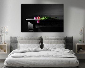 Tulpen im Gegenlicht von Gerhard Albicker