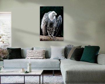Gier - imposante vogel van Marly De Kok