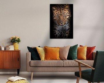 Mächtiger Leopard geht direkt auf Sie zu schauen vertikale Komposition, Schwarzer Hintergrund von Michael Semenov