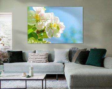Weiße Blüte auf einem Apfelbaum im Frühling von Sjoerd van der Wal