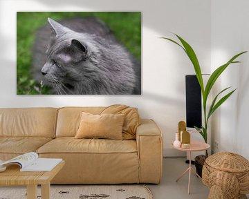 Tête d'un chat gris foncé à poils longs dans l'herbe sur Henk Vrieselaar