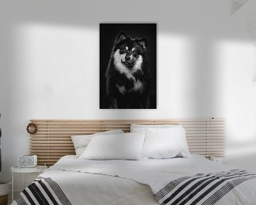 Fine Art Porträt eines Finnischer Lapphund in schwarz-weiß 2/3 von Lotte van Alderen