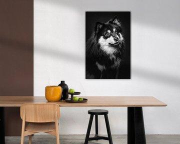 Fine Art Porträt eines Finnischer Lapphund in schwarz-weiß 1/3 von Lotte van Alderen