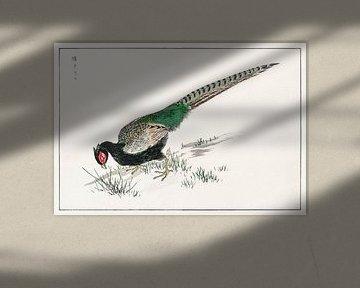 Grüner Fasan Illustration von Numata Kashu von Studio POPPY