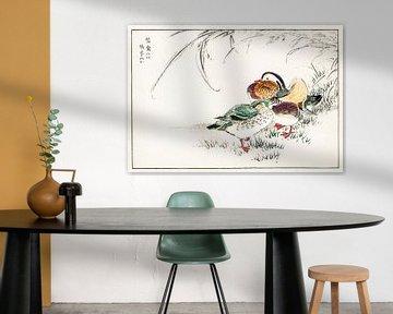 Mandarin-Ente und Perlgraupen-Illustration von Numata Kashu von Studio POPPY
