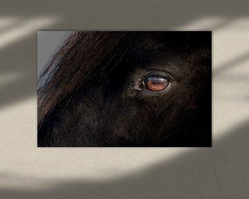 Auge eines schwarzen Friesenpferdes von Henk Vrieselaar