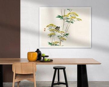 Flanellblume (Actinotus helianthi) von Kōno Bairei von Studio POPPY