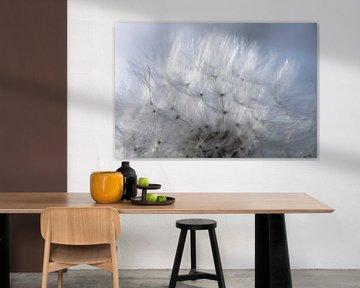 Vrucht van een paardenbloem met glinsterende pluisjes van Henk Vrieselaar