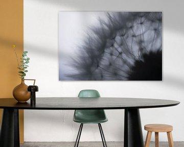 Vrucht van een paardenbloem met silhouet van pluisjes van Henk Vrieselaar