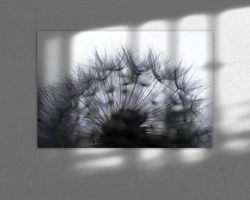 Frucht eines Löwenzahns mit Silhouette von Flaum gegen hellen Hintergrund von Henk Vrieselaar