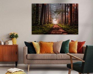 Laan door het bos van Joost Lagerweij