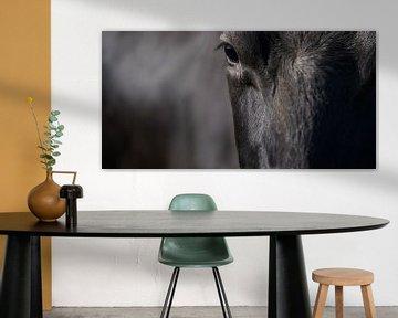 Weitwinkelfoto von Kopf und Rumpf einer schwarzen Kuh von Henk Vrieselaar